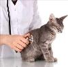 Ветеринарные клиники в Волочаевке Второй